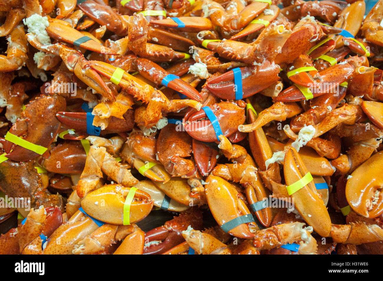 Pile of lobster claws in Saco, Maine. - Stock Image