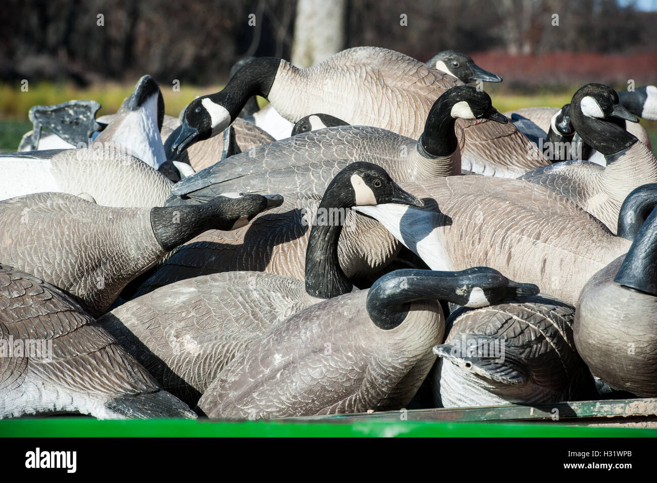 Goose Decoys used for hunting Stock Photo: 122358723 - Alamy