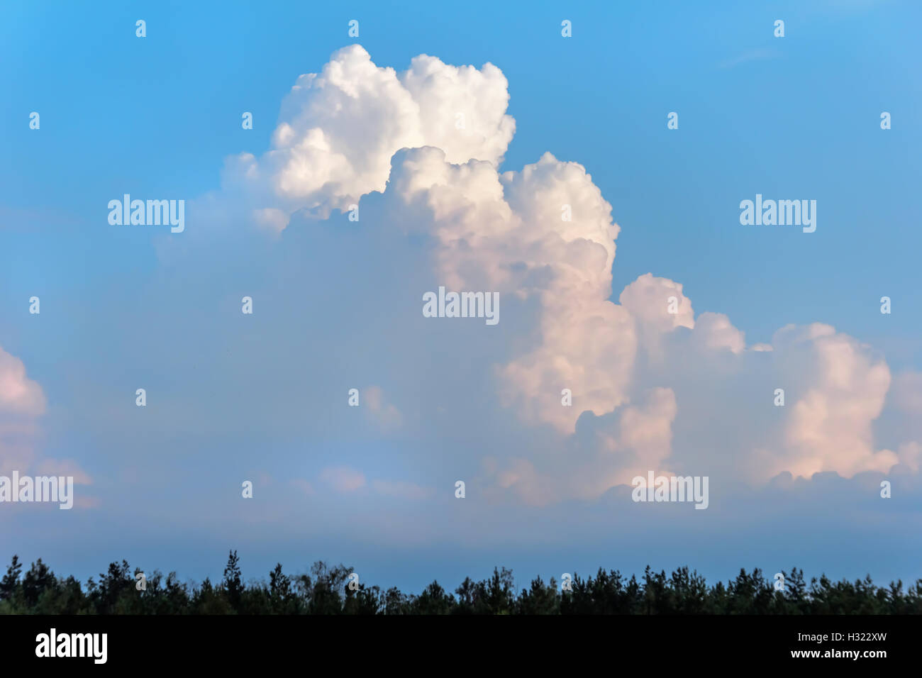 Beauty white fluffy clouds at sunset blue evening sky - Stock Image