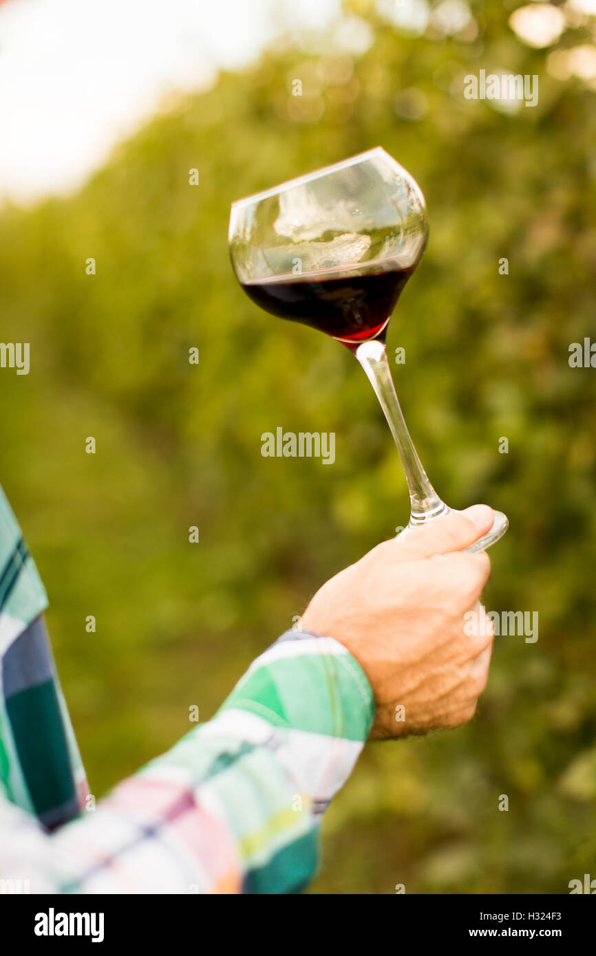 Young winemaker tasting red wine in vineyard - Stock Image
