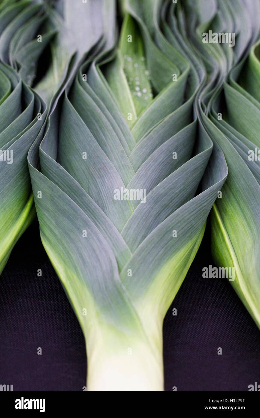 Alliums. Large leeks on a black background. - Stock Image