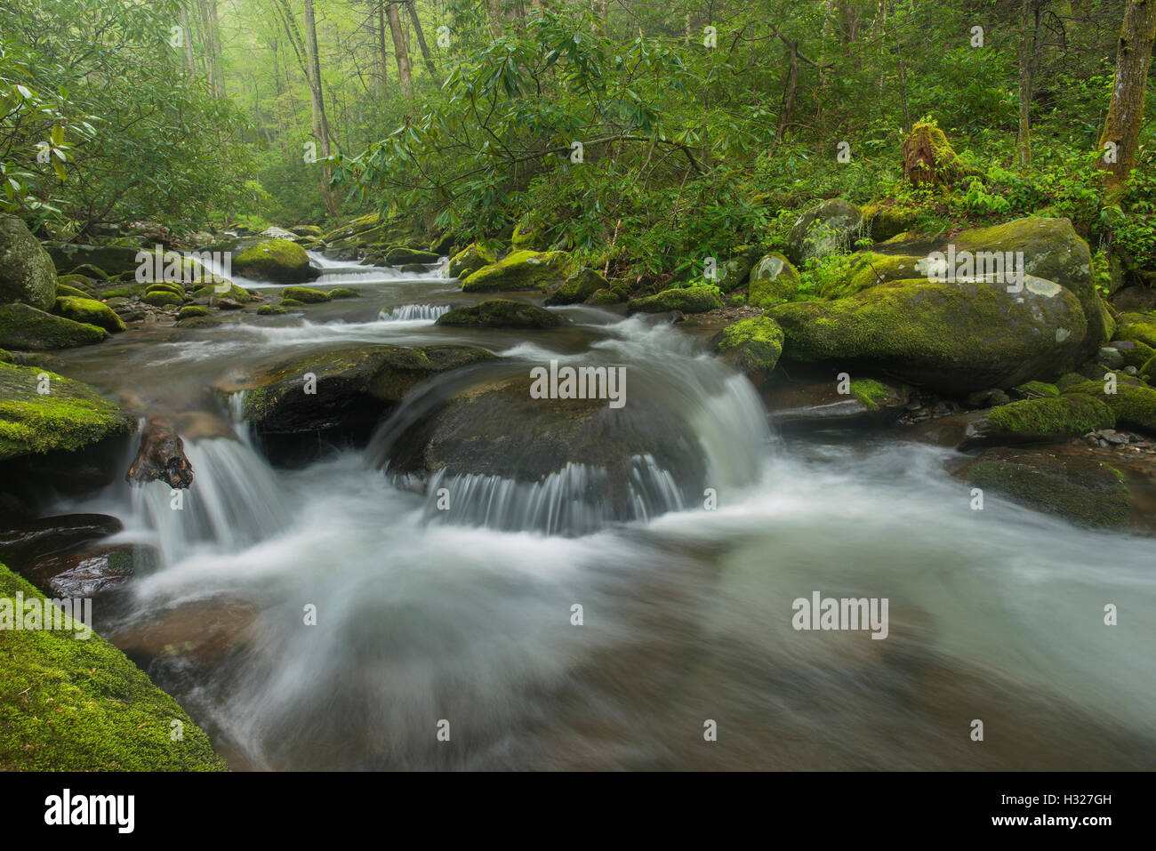 Moss-covered rocks and boulders along Roaring Fork River, Summer, Great Smoky Mountain National Park, Tennessee - Stock Image