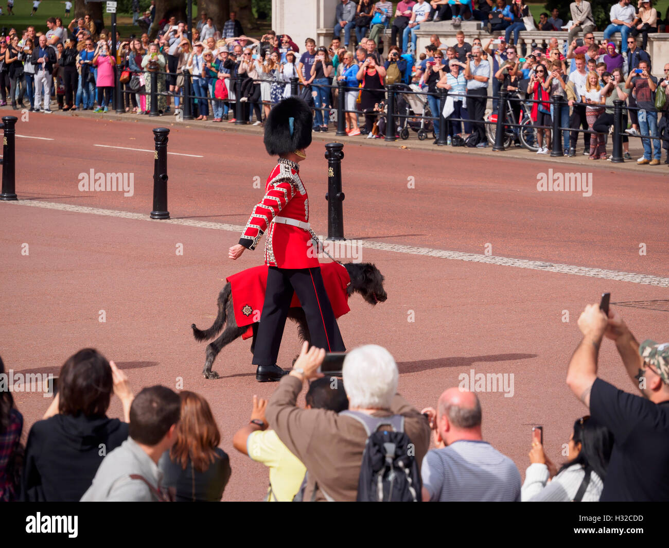 The Irish Wolfhound mascot of the Irish Guards leads the 1st Battalion at the Changing of the Guard. Stock Photo
