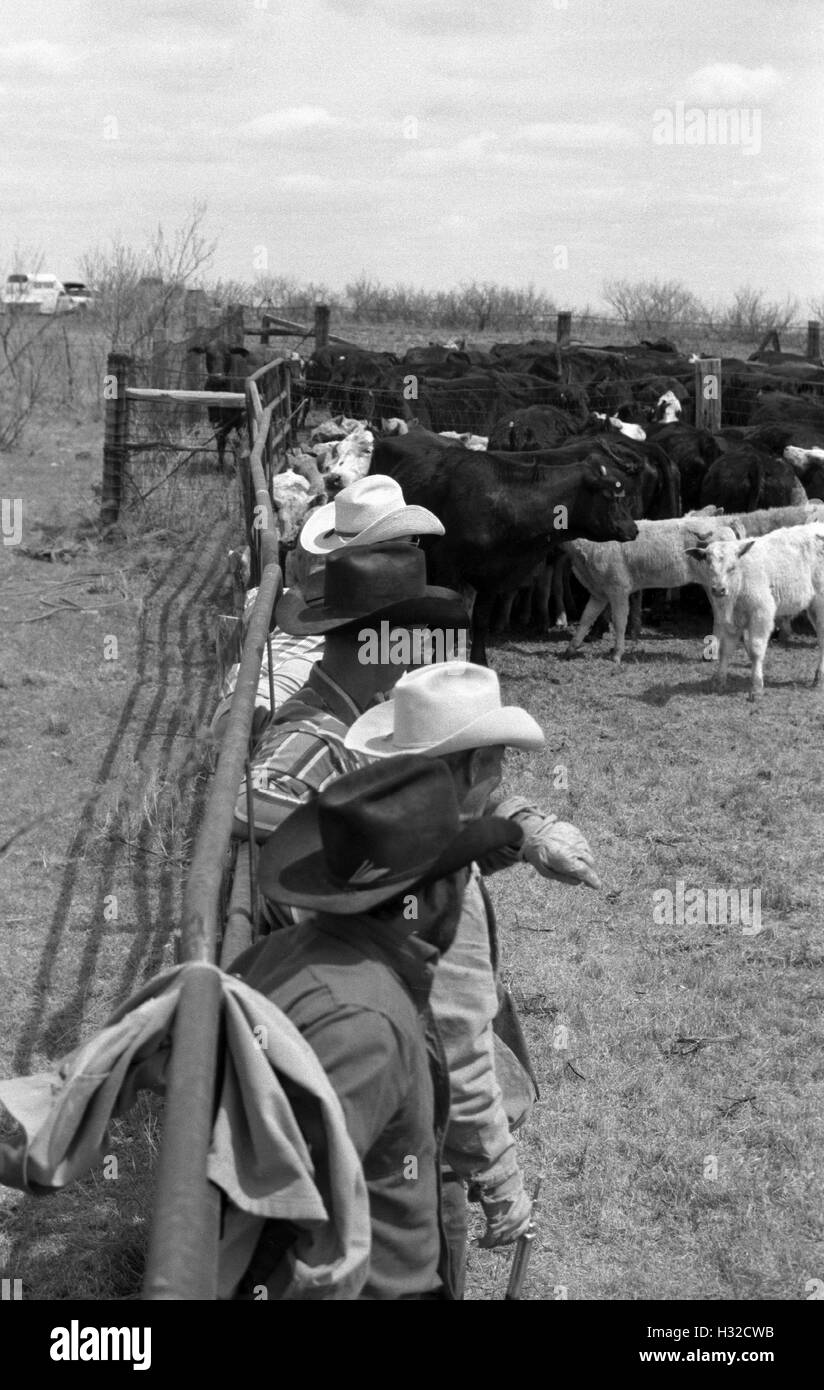 Cowboys resting against a railing of a pen at Sandy Camp, Clarendon, TX (scan from b&w negative) Circa 1998 - Stock Image