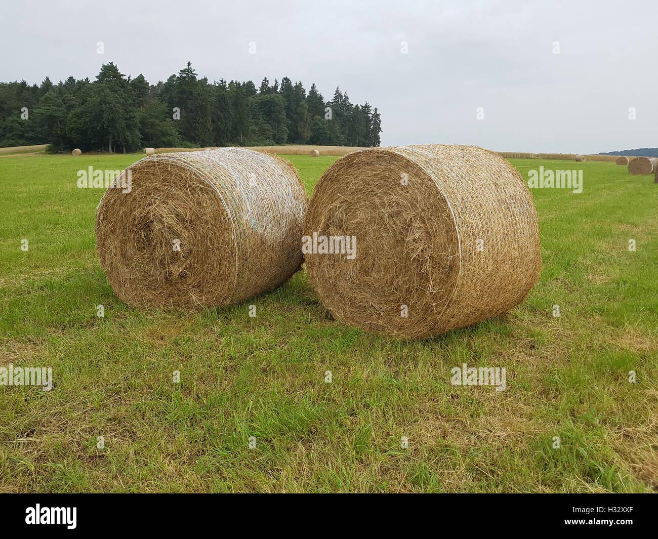 Heuballen, Ballen, Futter, Heu, Stock Photo