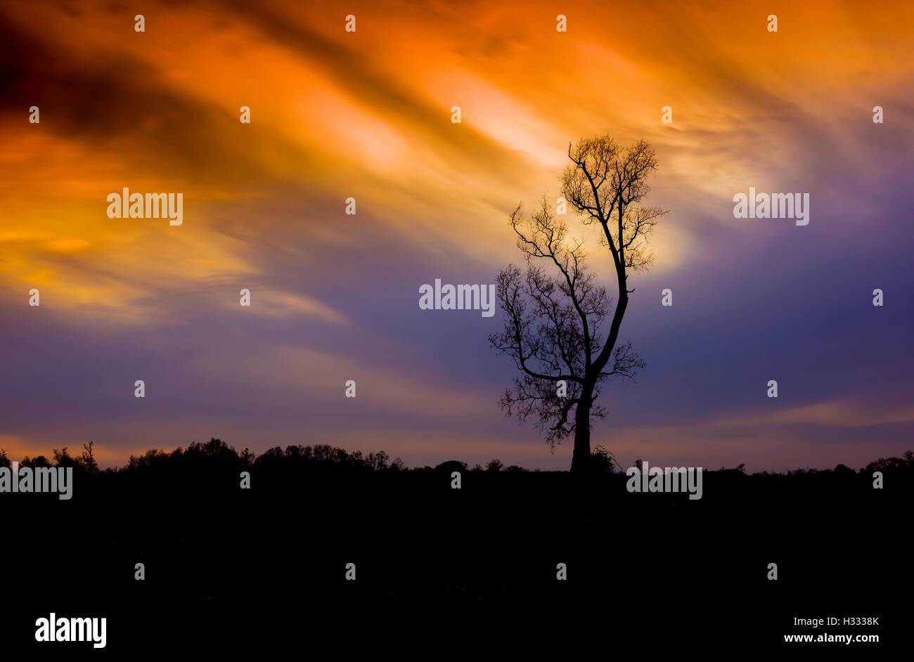 Tree at Sunset, Osorno, The lakes distrit. - Stock Image