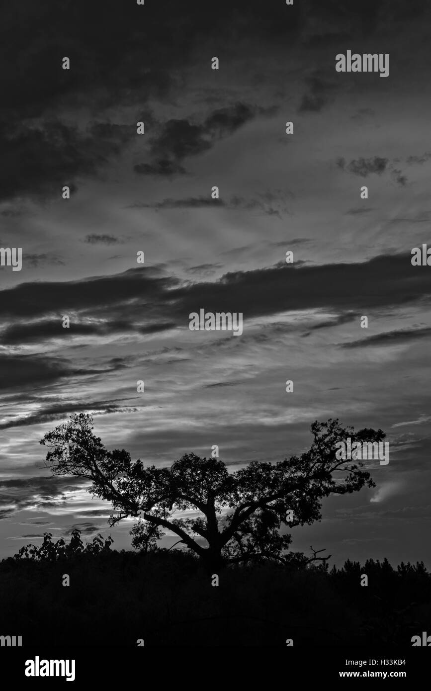 Sunset in North Florida. - Stock Image