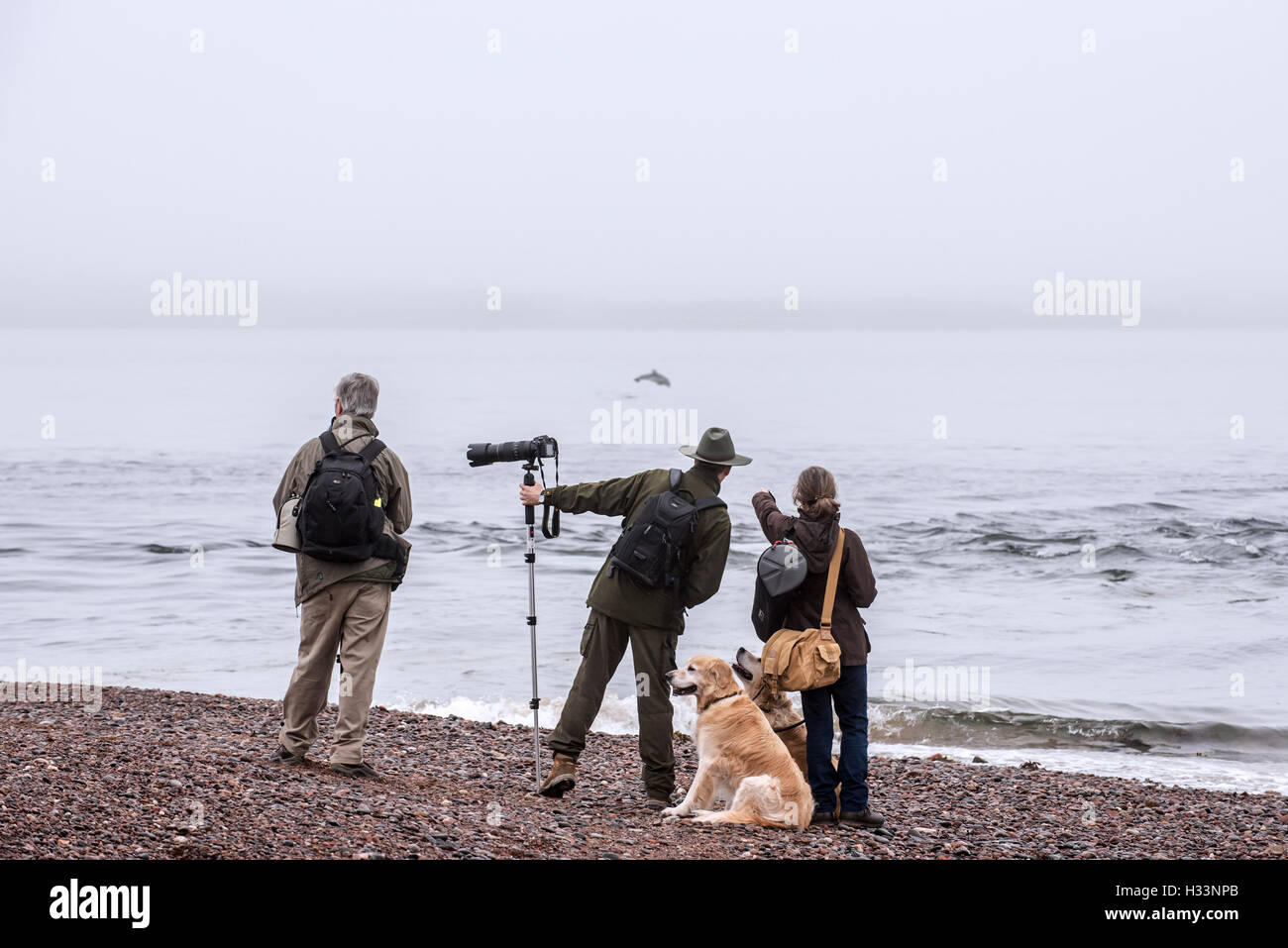 Wildlife photographers and whale watchers spotting bottlenose dolphin at Chanonry Point in the fog, Moray Firth, - Stock Image