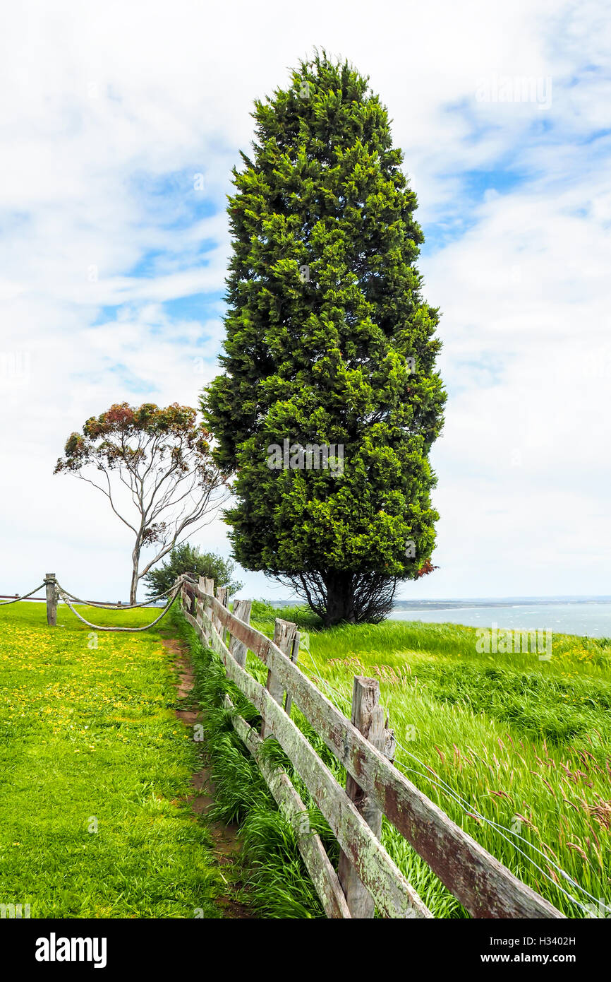 A wooden fence farmyard  and a conifer tree in rural Victoria, Australia. - Stock Image