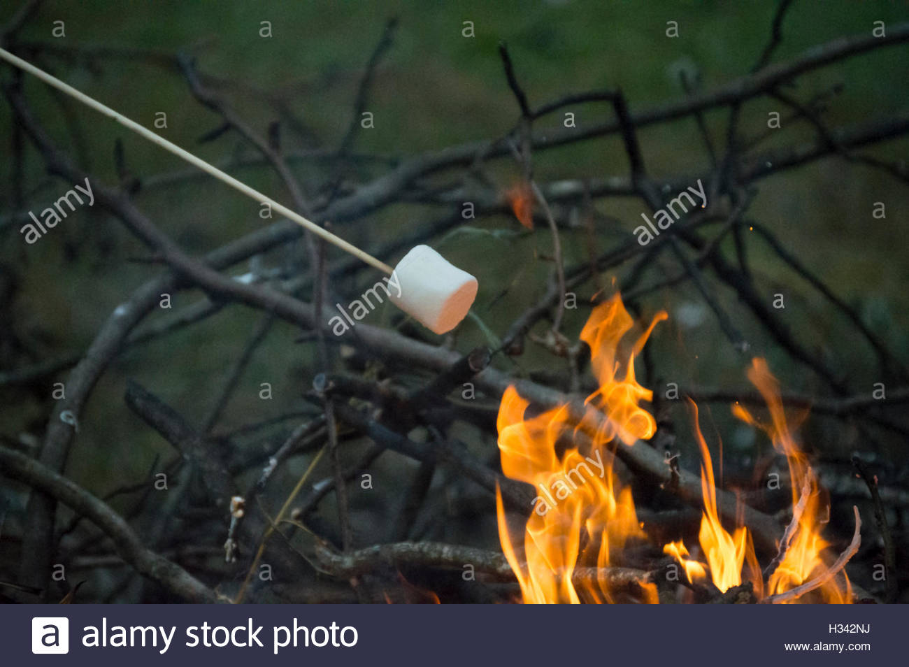 Roasting Marshmallows Over A Bonfire In Hampton Virginia