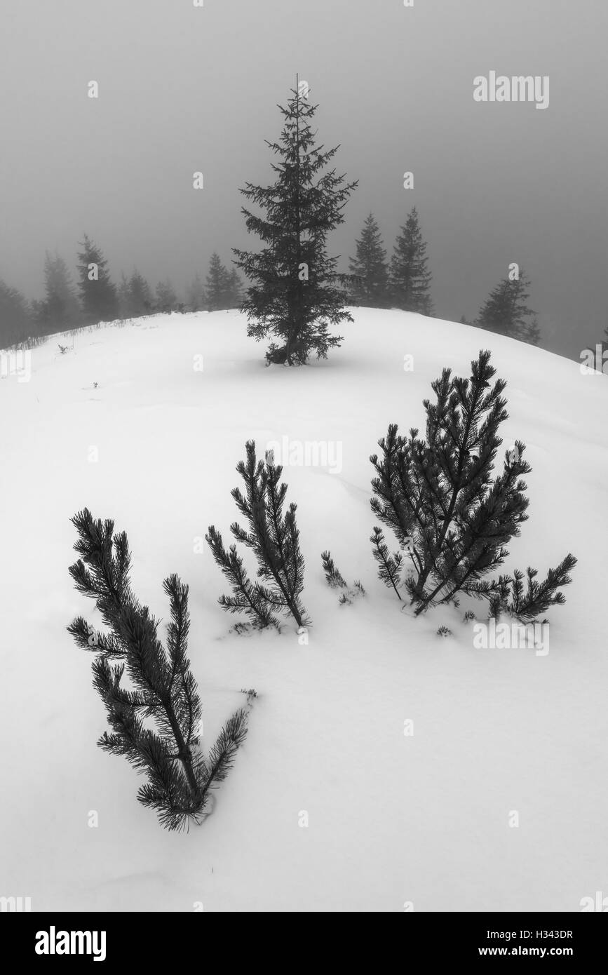 Foggy landscape with twig in snow - Stock Image