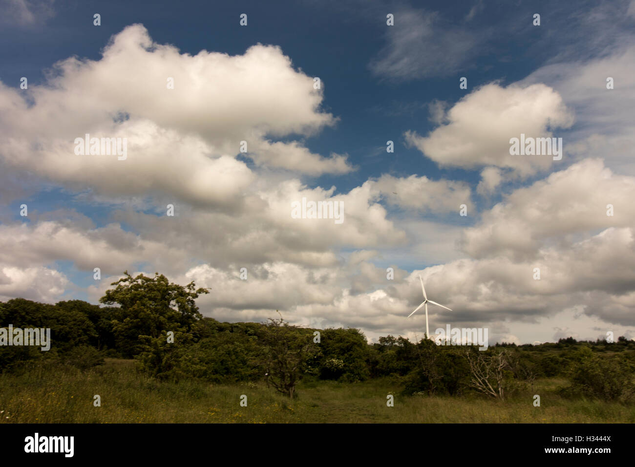 wide angle, field with trees and pretty blue sky with white fluffy clouds and a wind mill on the horizon - Stock Image