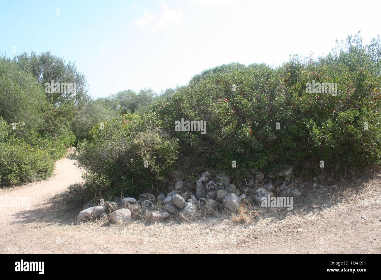 Bushes surrounded by rocks and a dirt path - Stock Image