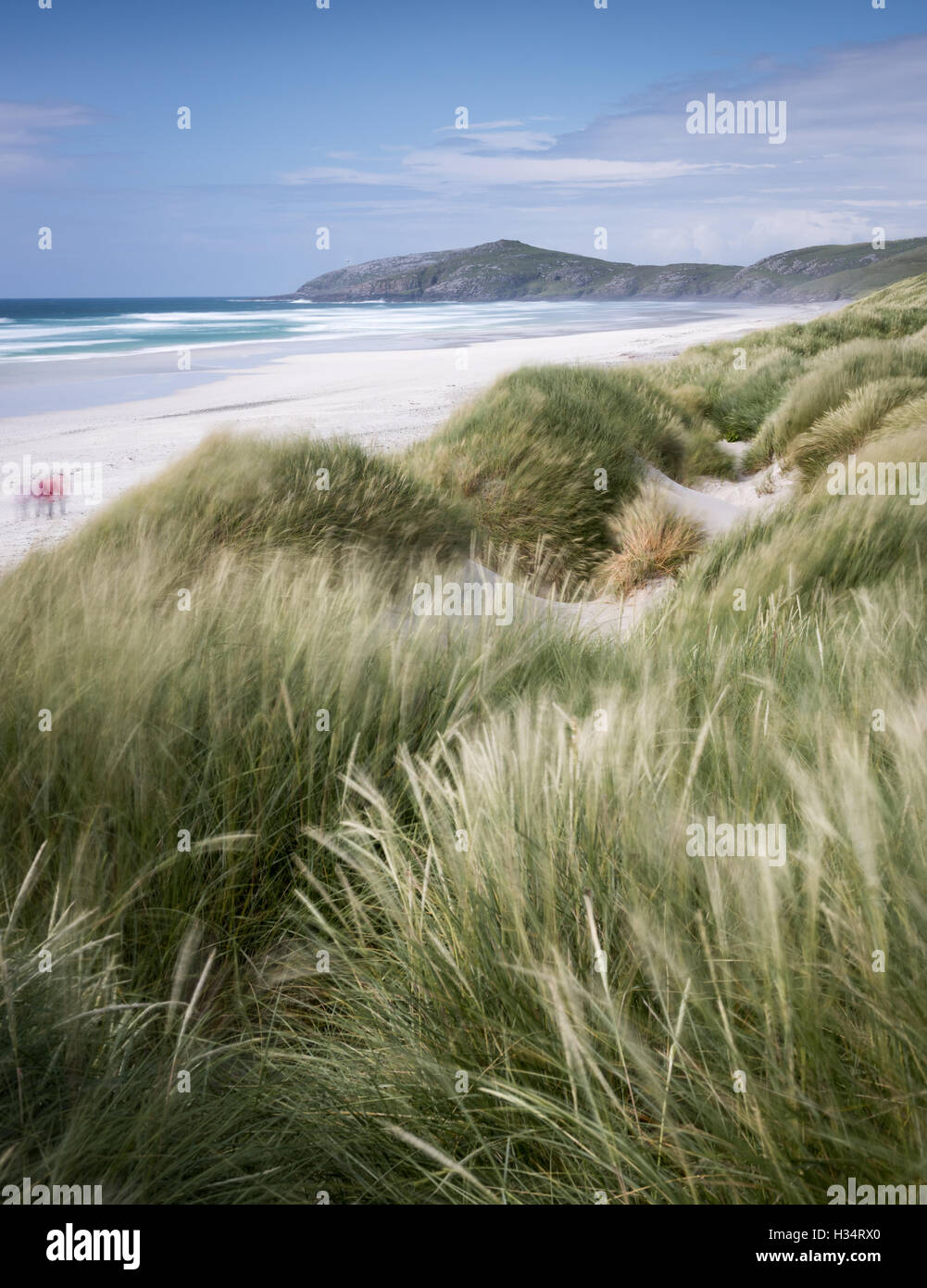 Windswept grasses at Traigh Eais beach, Isle of Barra, Outer Hebrides, Scotland - Stock Image