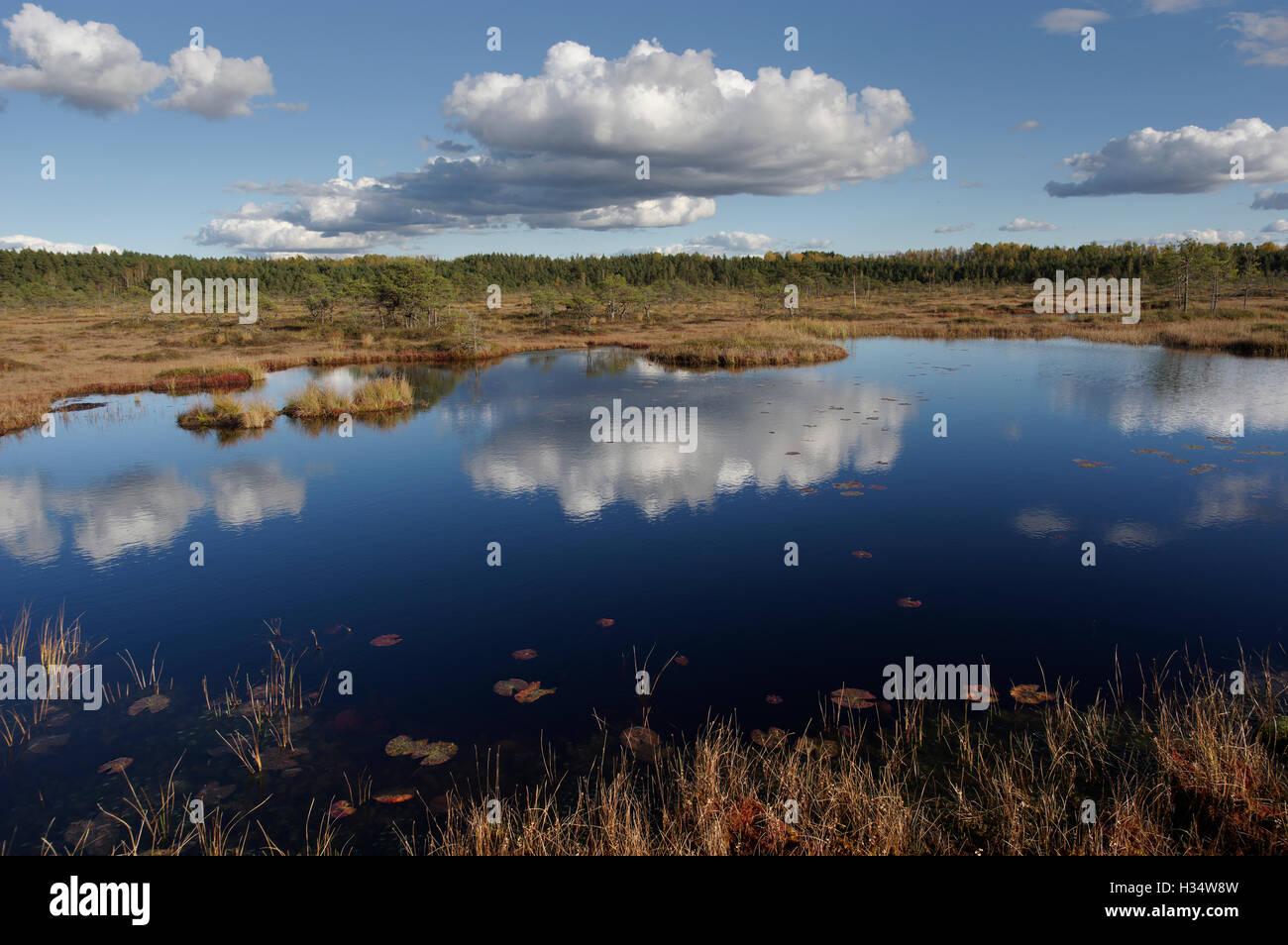 Soomaa National Park. Riisa Bog, Pärnu County, Estonia, Europe - Stock Image