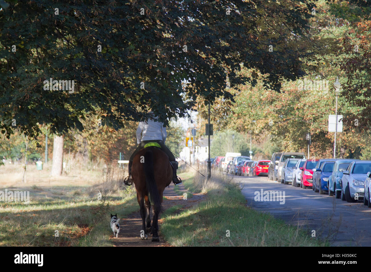 Wimbledon London, UK. 4th October 2016. Horse riders from the Wimbledon stables enjoy riding on Wimbledon Common in the  autumn morning sunshine Credit:  amer ghazzal/Alamy Live News Stock Photo