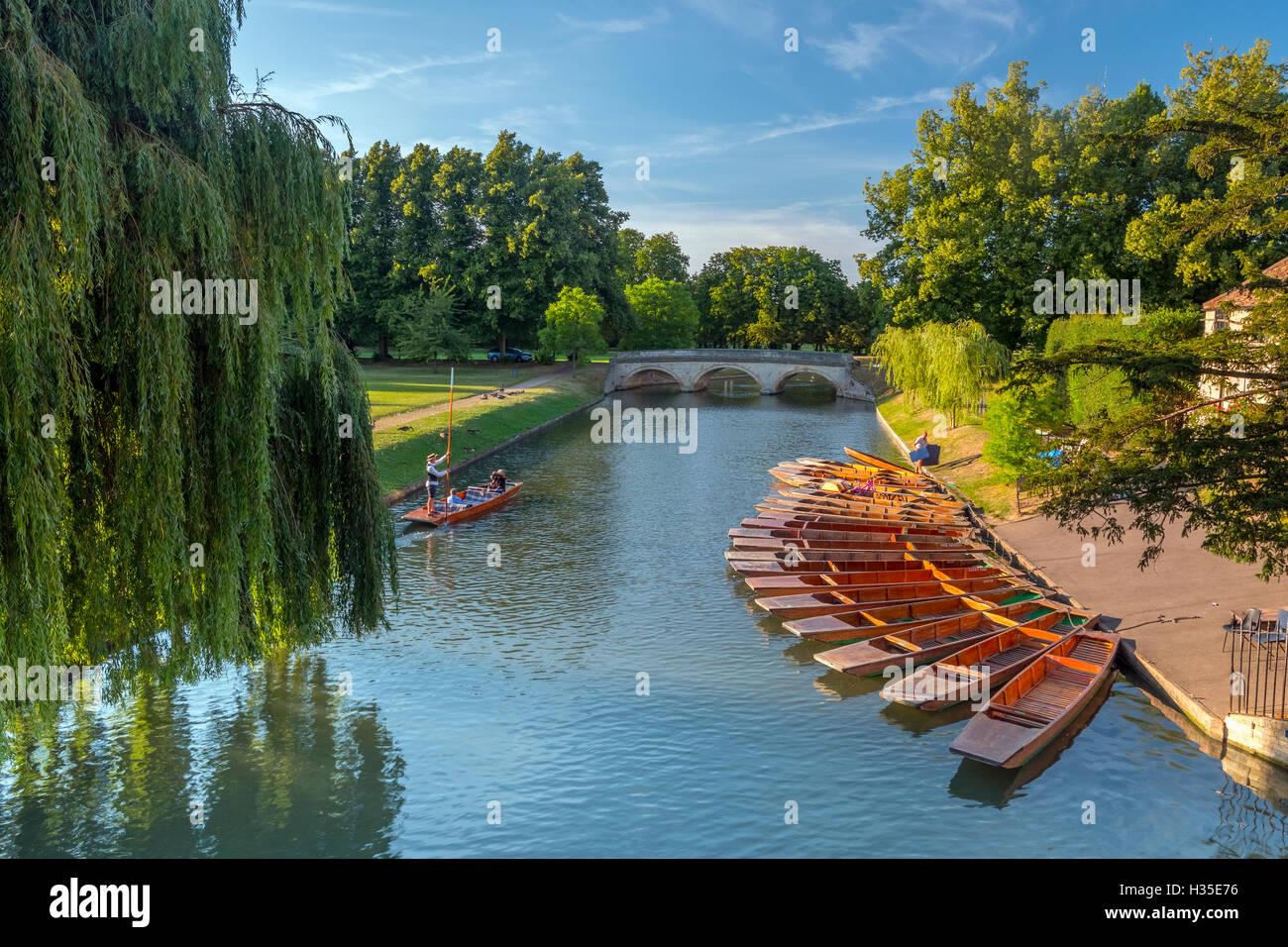 Punts on The Backs, River Cam, Cambridge, Cambridgeshire, England, UK - Stock Image