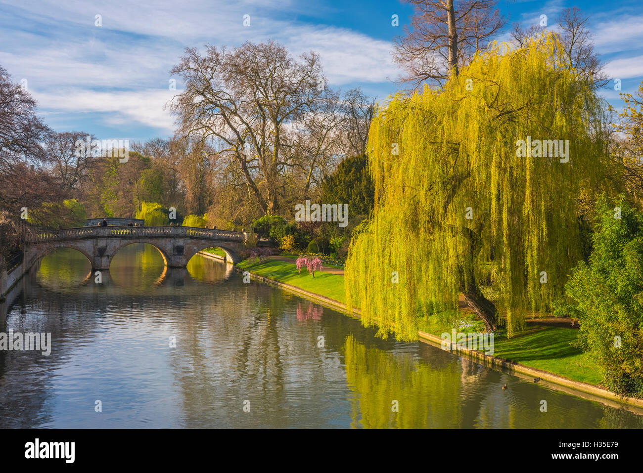 The Backs, River Cam, Cambridge, Cambridgeshire, England, UK - Stock Image