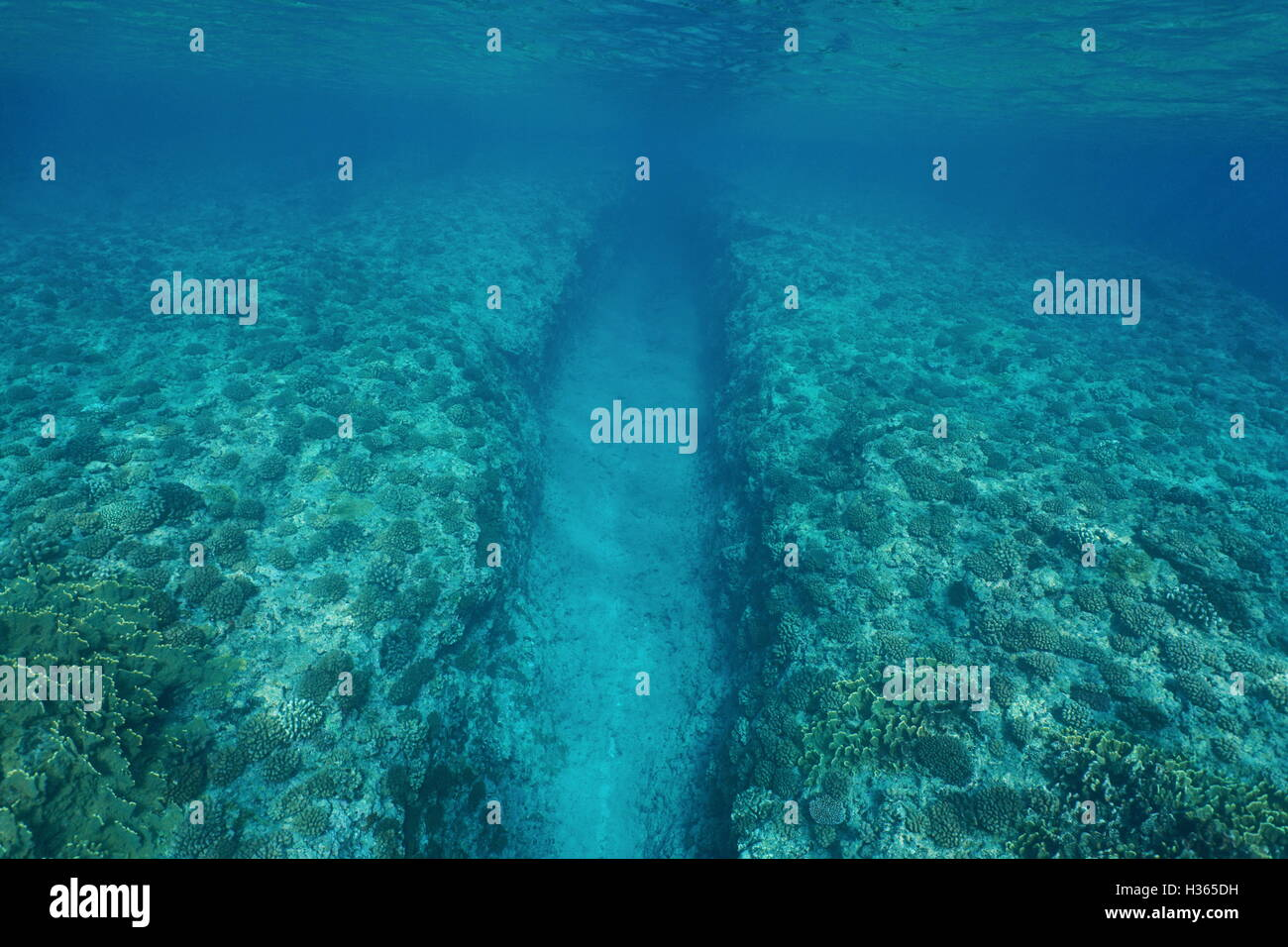 Natural trench underwater sea into the fore reef slope with corals on the ocean floor, Huahine, Pacific ocean, French - Stock Image
