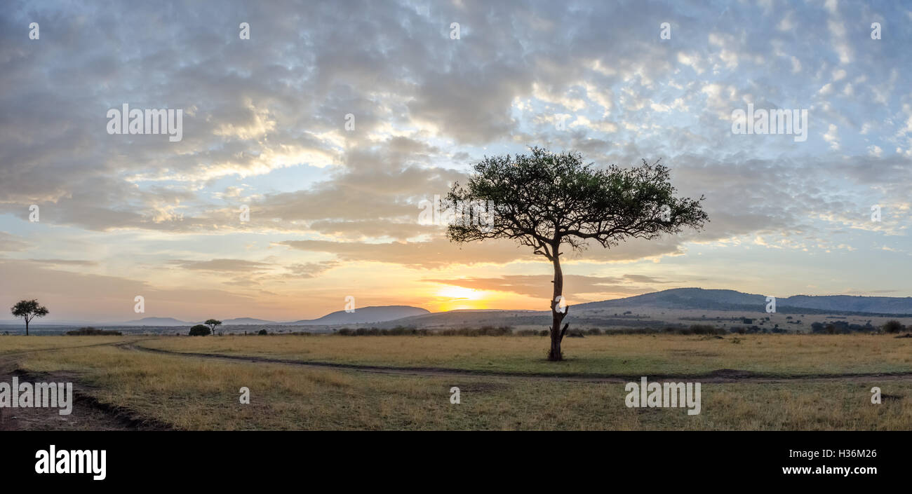 Sunrise on the Masai Plains - Stock Image