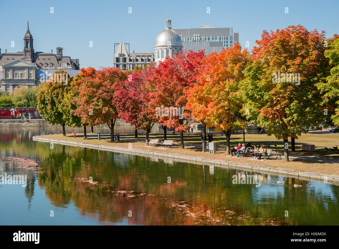 Montreal Ca 4 October 2016 Maple Trees In Autumn Colors