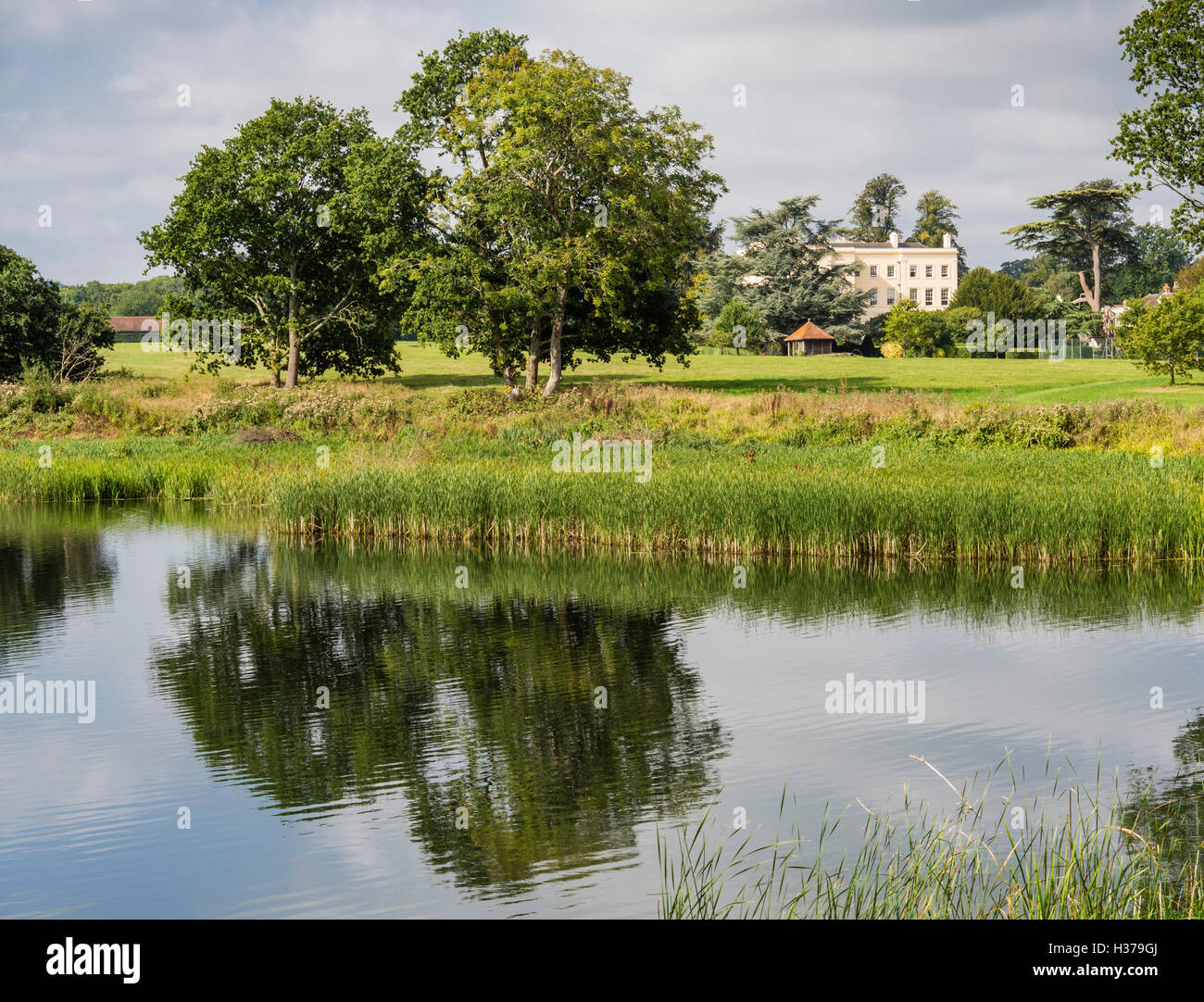 Chingford Pond, Local Nature Reserve (LNR), in Burton Park, a Site of Special Scientific Interest), (SSSI), Petworth, - Stock Image