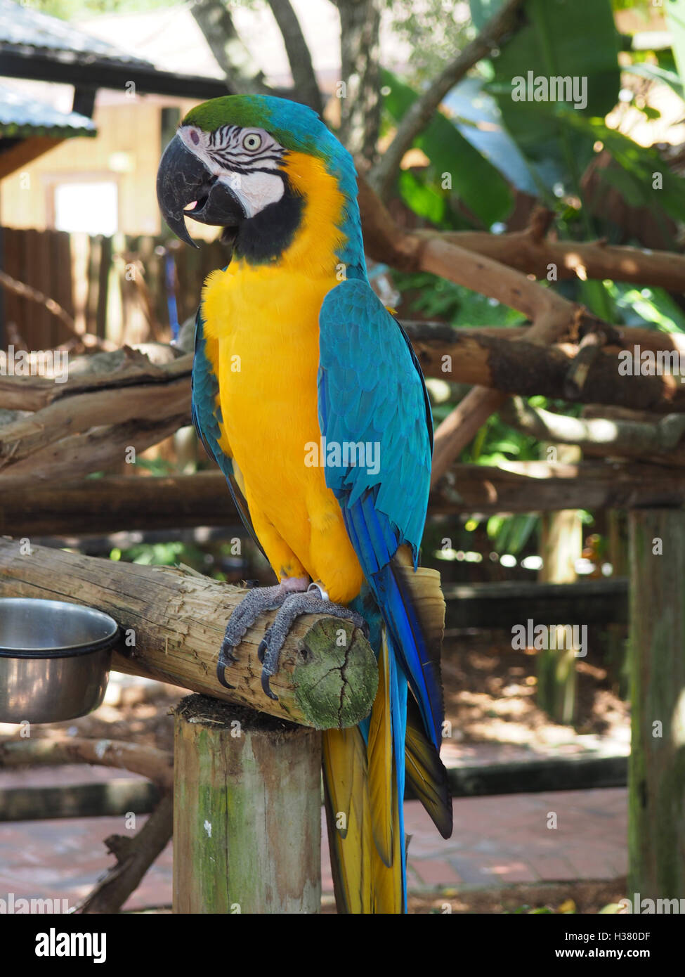 bright colored macaw parrot sitting on a wood perch - Stock Image