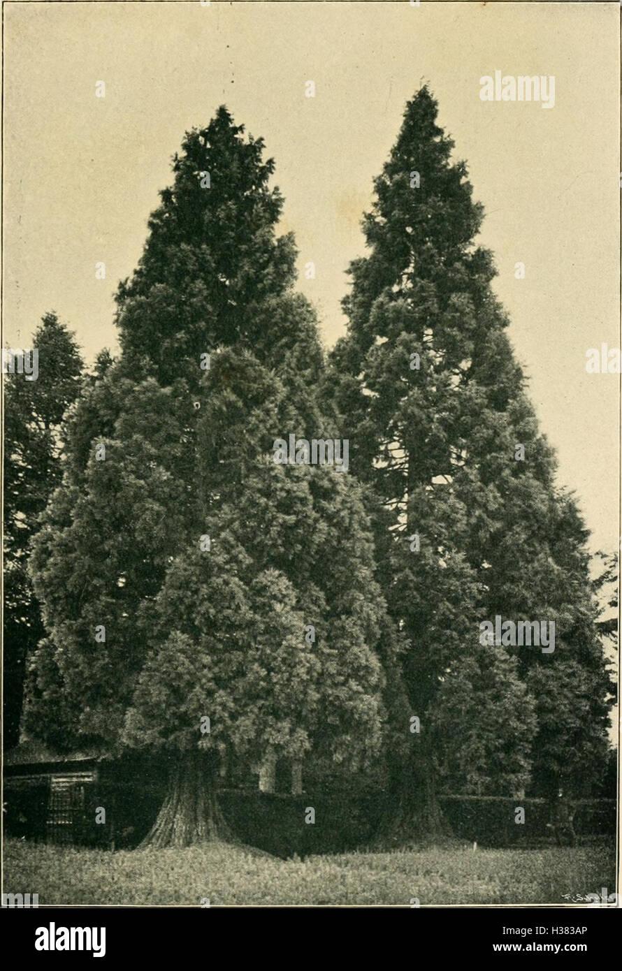 Parkbäume und ziersträucher (1910) (1459811 Stock Photo