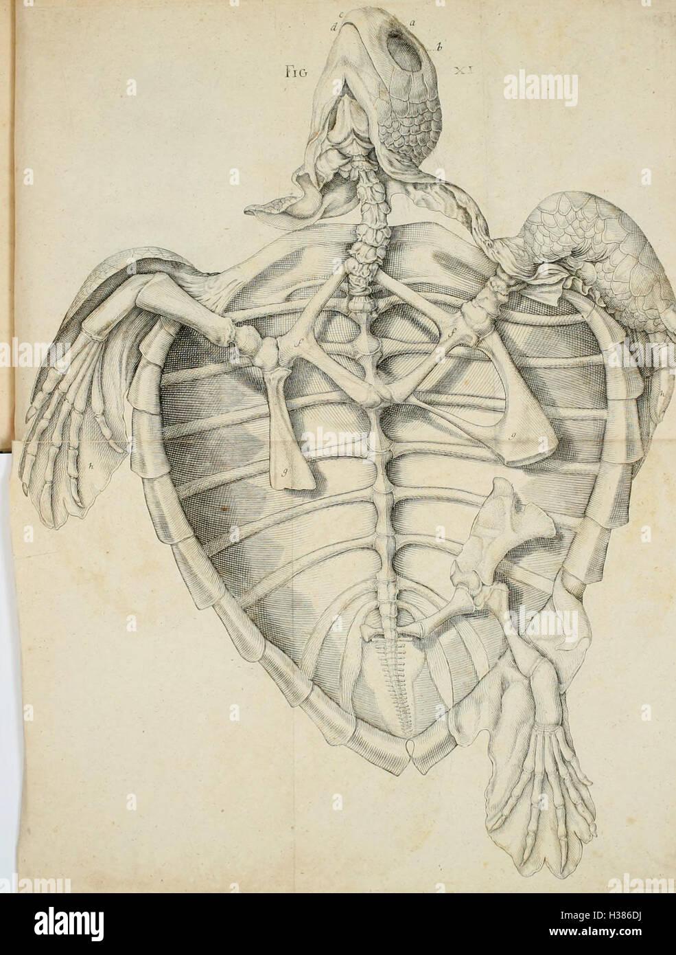 Anatomische Stock Photos & Anatomische Stock Images - Alamy