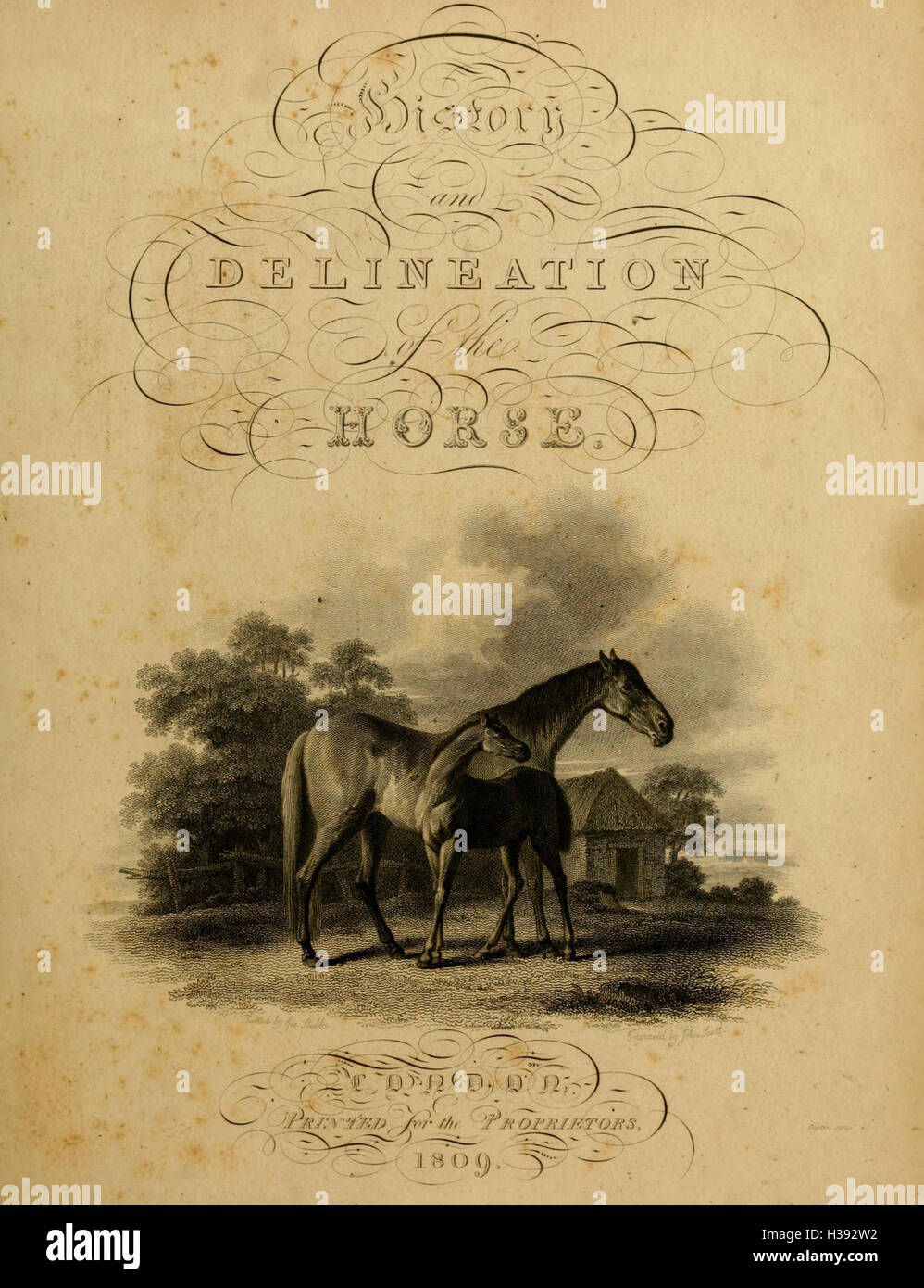 The history and delineation of the horse, in all his varieties BHL182 - Stock Image