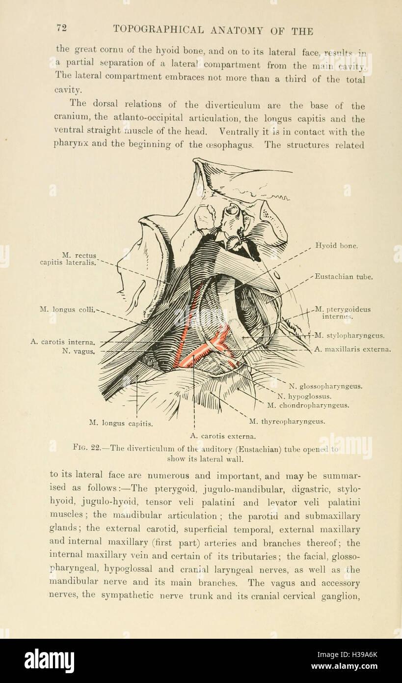 Topographical Anatomy Head Neck Horse Stock Photos Topographical