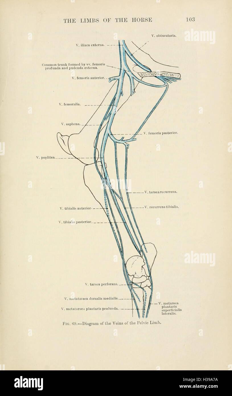 Schön Linke Recurrens Anatomie Fotos - Anatomie Ideen - finotti.info