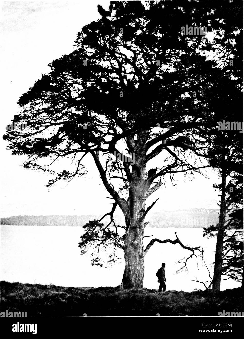 books book black and white stock photos images page 57 alamy Spain Landscape the trees of great britain and ireland 1906 2015910 stock image
