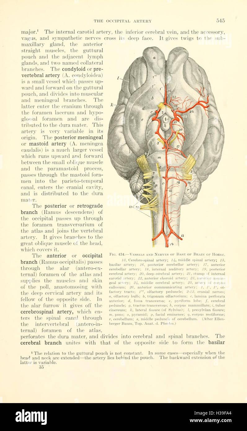 Draw Anatomy Stock Photos & Draw Anatomy Stock Images - Page 7 - Alamy