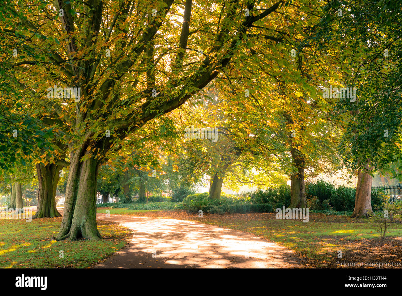Autumn Trees at West Park Wolverhampton, England - Stock Image