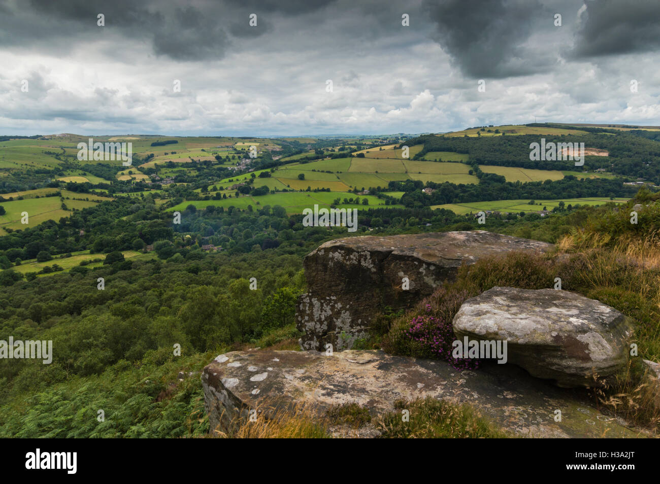 Heather on the top of the hill at Froggatt Edge - Stock Image