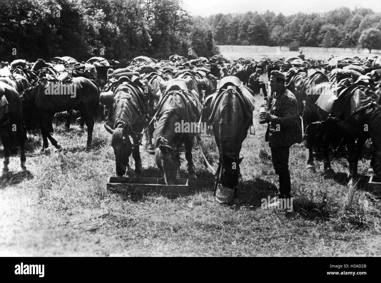 March break of a German cavalry unit in France, 1940 - Stock Image