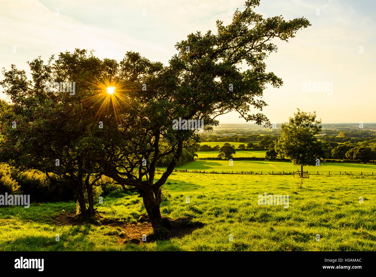 Setting sun and hawthorn tree with view over the Lancashire plain from Harrock Hill near Parbold Lancashire England - Stock Image
