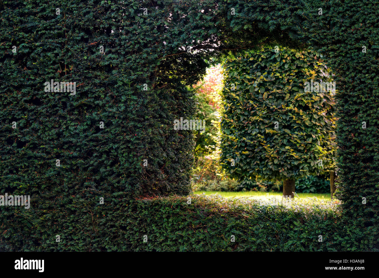 Looking through a hole in the yew hedge into a garden at Waterperry gardens, Wheatley, Oxfordshire. England - Stock Image