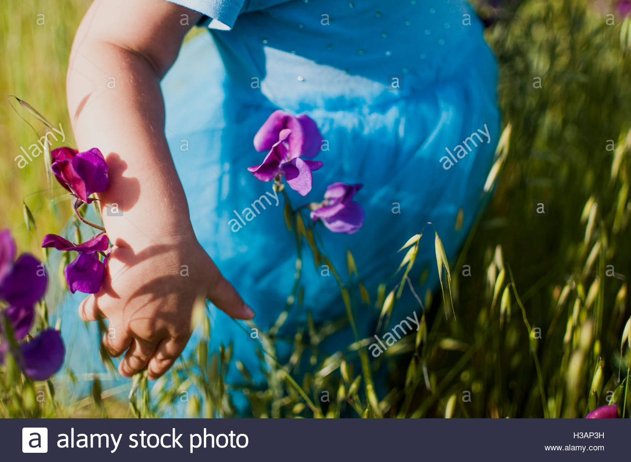 little girl picking flowers in a field - Stock Image