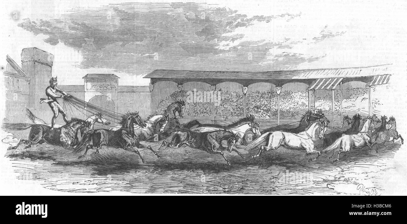 PARIS The Paris Hippodrome Seventeen horses driven 1860. The Illustrated London News - Stock Image