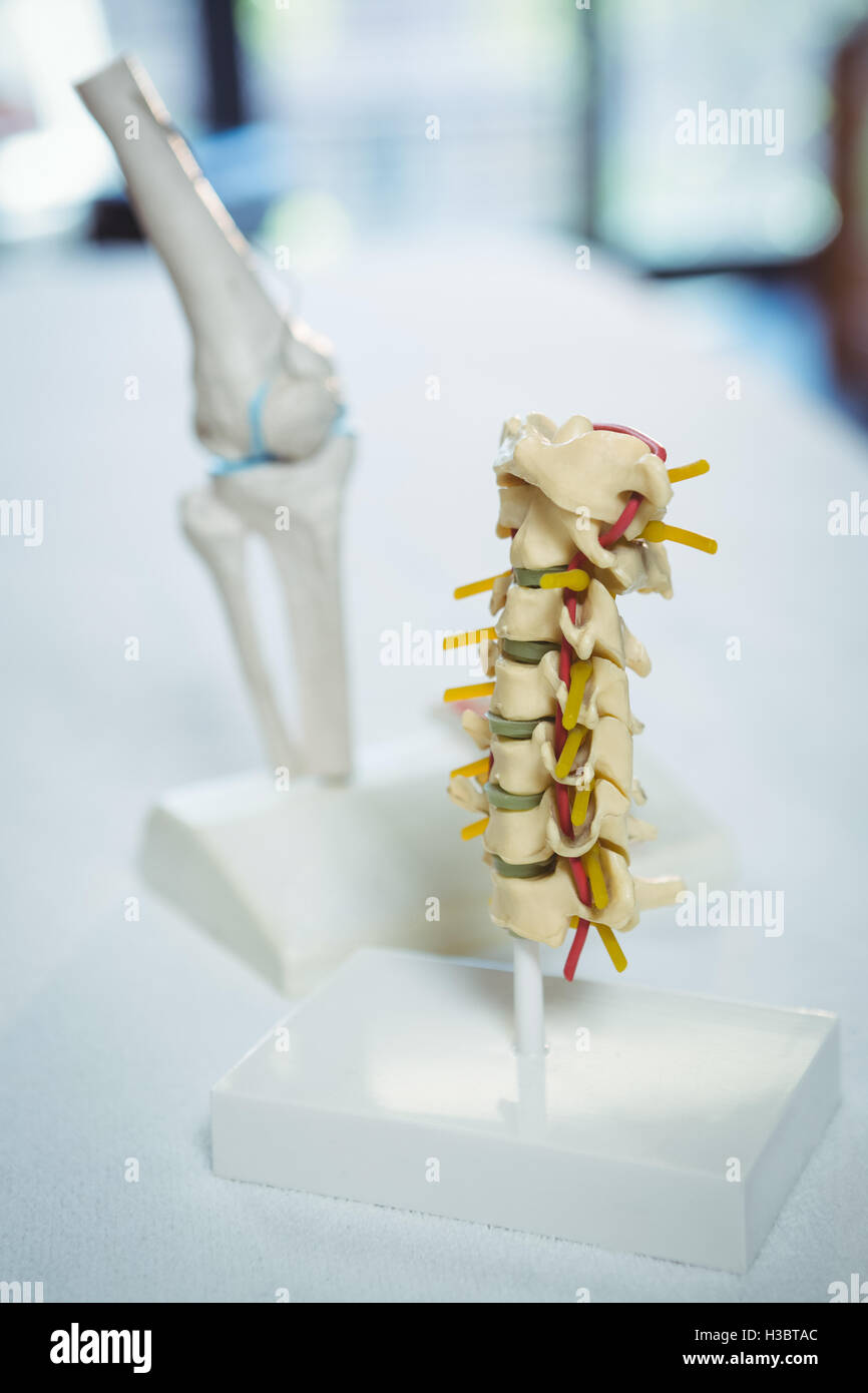 Close-up of lumbar spinal column - Stock Image