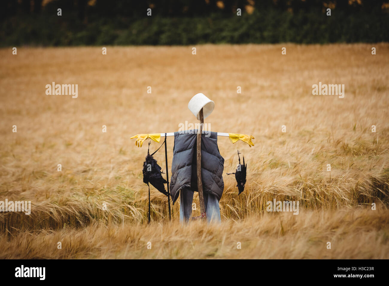 Scare crow standing in front of wheat field - Stock Image