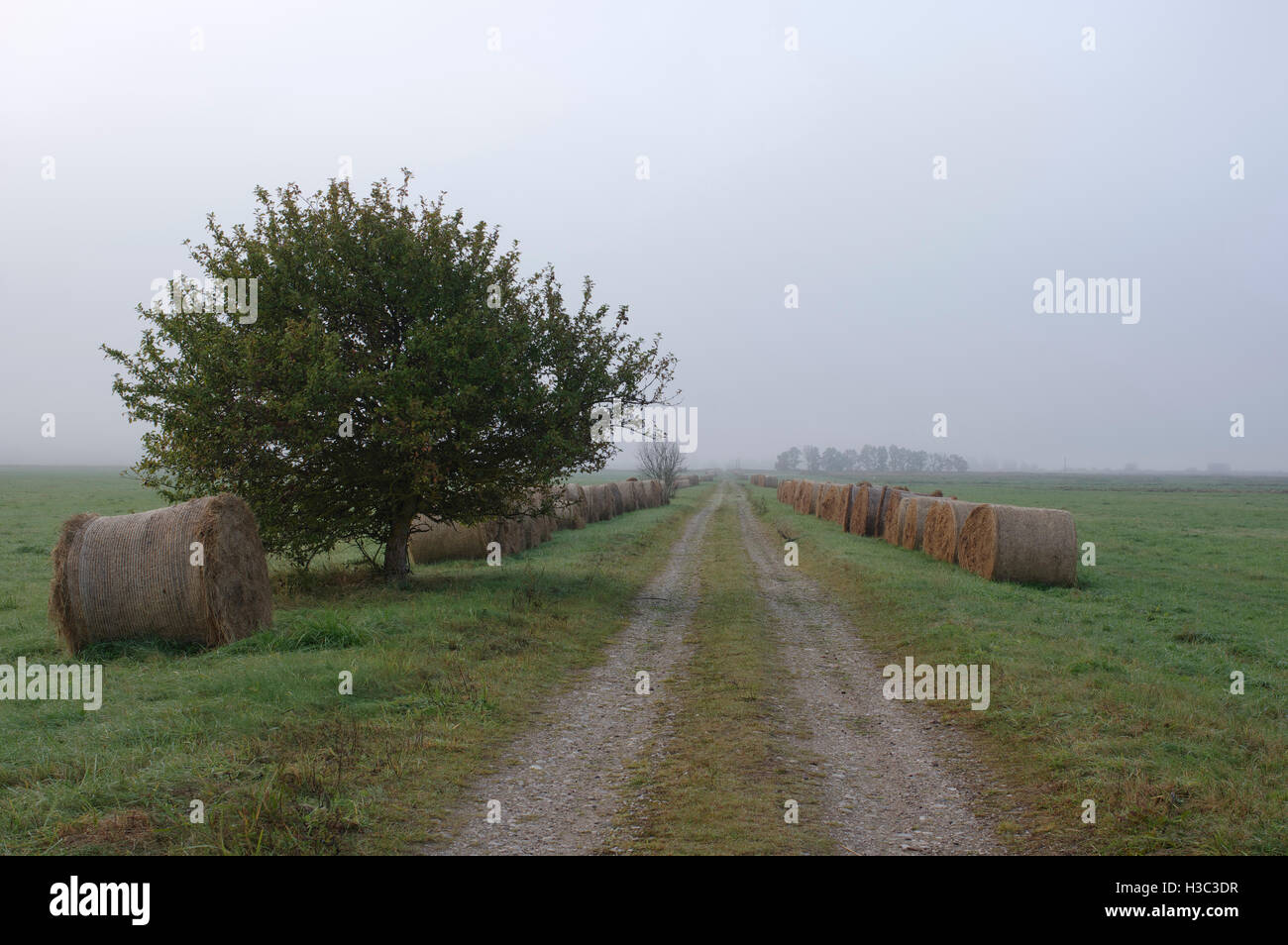 Estonian foggy morning landscape with apple tree, gravel and grass balls. - Stock Image