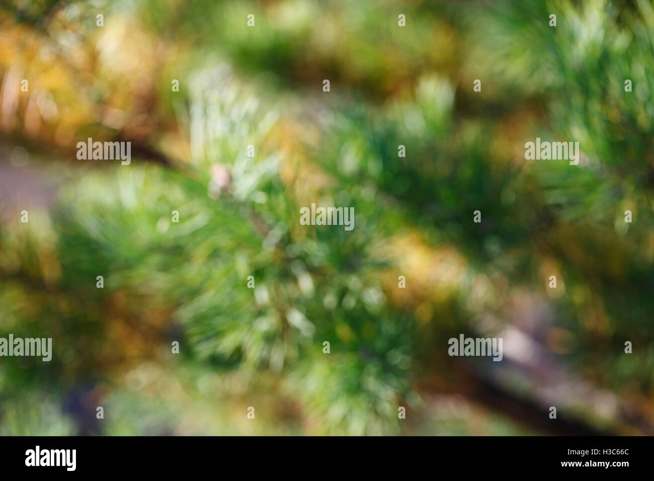 A Christmas Tree Needles Close Up Blurred Background