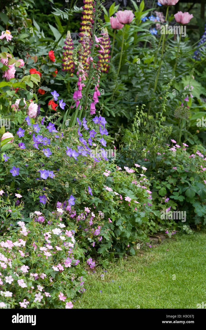 Herbaceous border in an English garden. - Stock Image