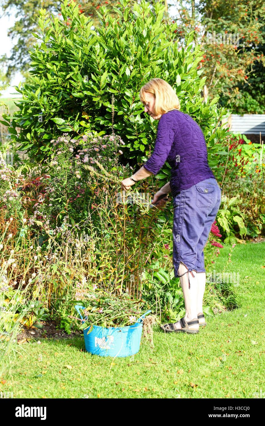 A woman dead heading plants in her garden with a trug full of cuttings - Stock Image
