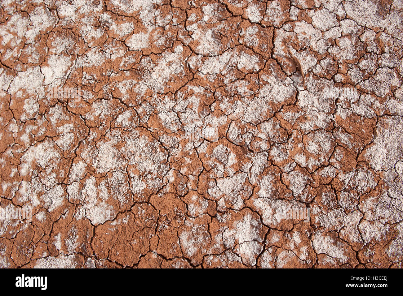 Close-up of dry, cracked soil - Stock Image