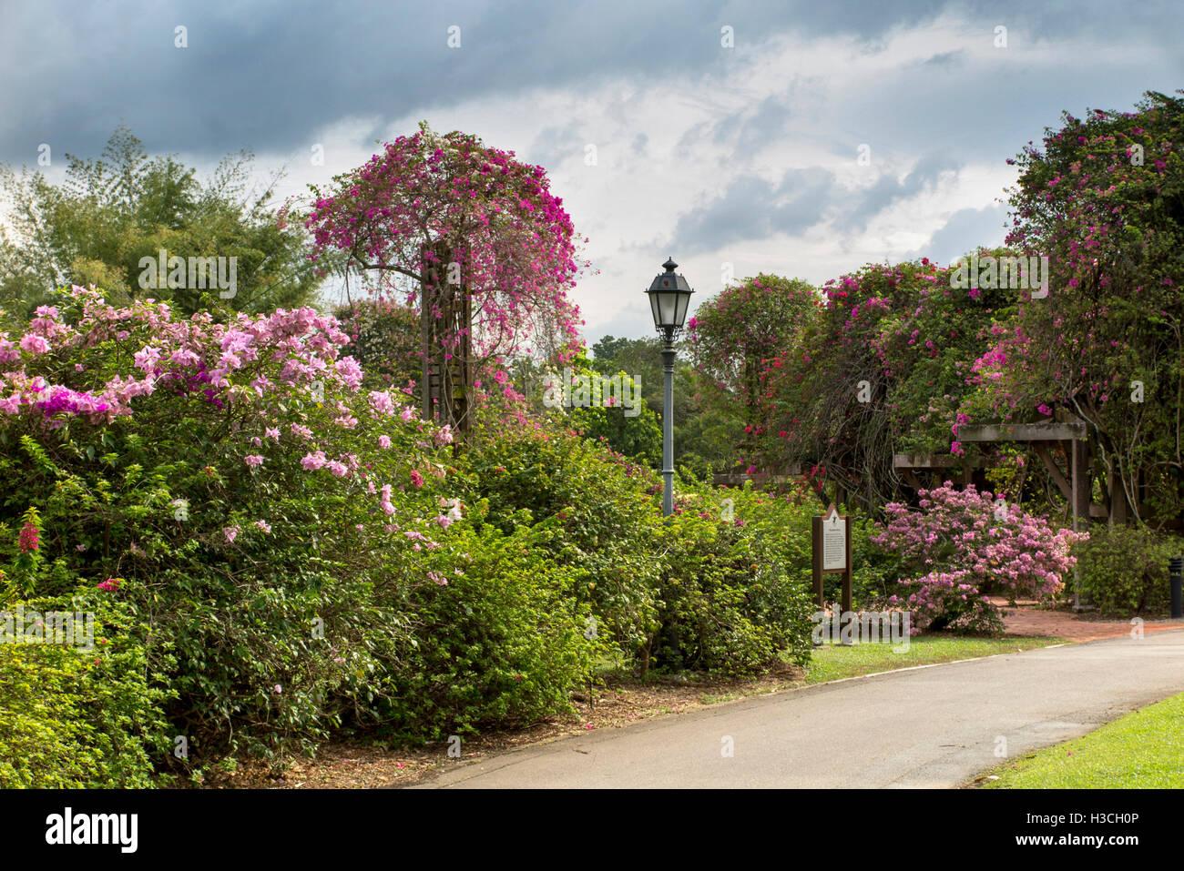 Singapore Botanic Gardens Eco Garden Way Stock Photo 122593318
