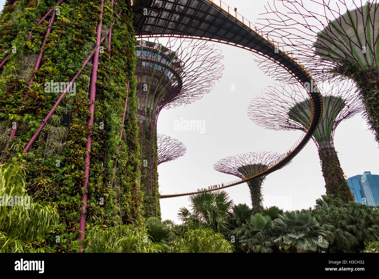 Singapore, Gardens by the Bay, Supertree Grove, OCBC skyway elevated walk Stock Photo